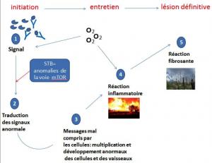 Mécanisme de la Sclérose Tubéreuse de Bourneville